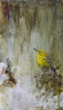 Stumble Across the Morning (Pine Warbler)